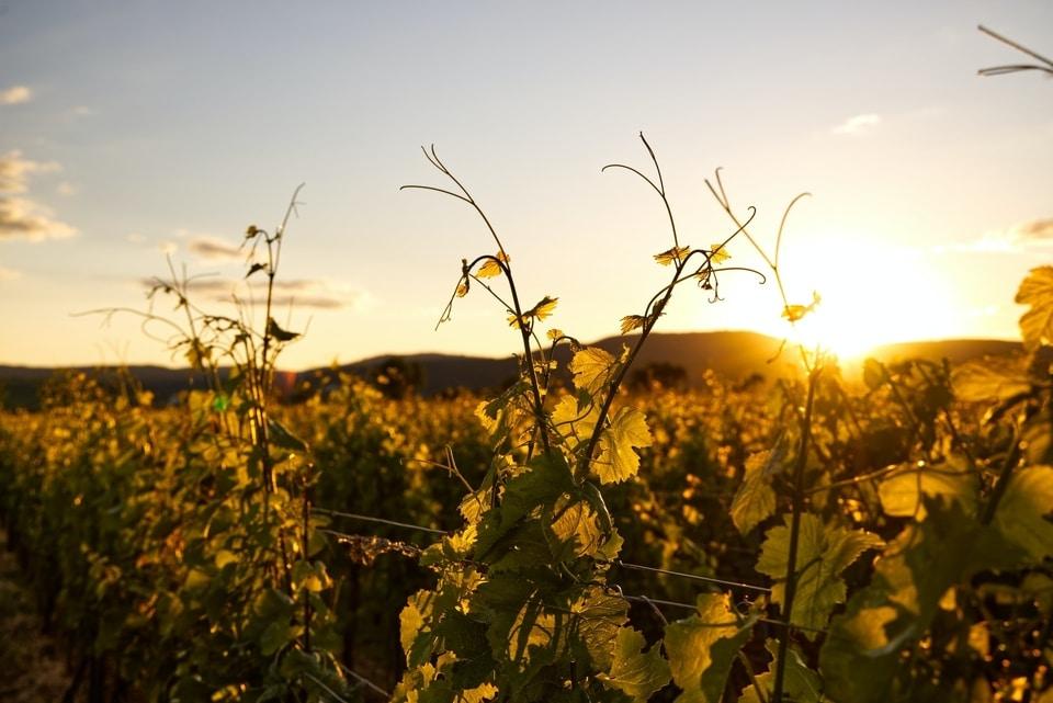 ORAZIO - Matériel de chai, viticole et vinicole, équipements pour cuves